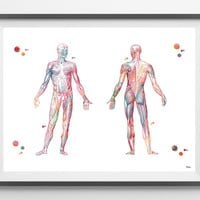 Human Body muscular system watercolor print anatomy art medical art poster Muscles of the Human Body print skeletal muscles wall art decor