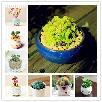 Big Sale ! 150 Pcs Mini Succulents Seed Cactus Stone Flower Seeds Lithops Pseudotruncatella Seed For Home Garden Anti-Radiation
