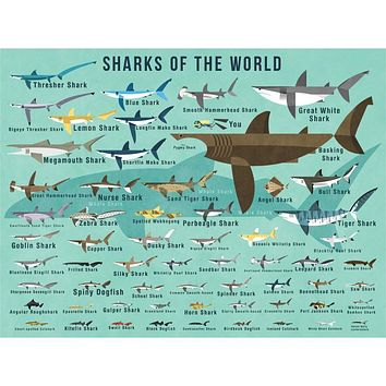 Sharks of the World Poster Decals