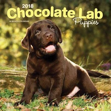 Lab Retriever Chocolate Puppies Wall Calendar, Chocolate Lab by BrownTrout