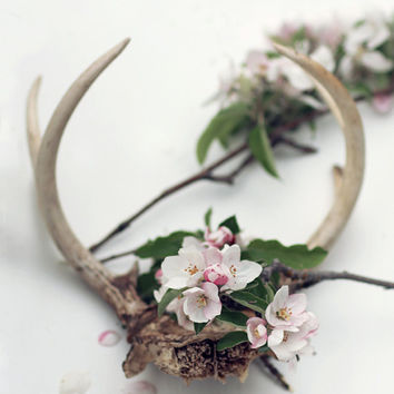 Antlers  With  Flowers  Apple Blossoms  Still Life Modern Minimal White Wall Decor