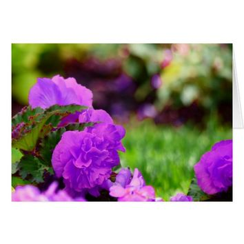 Purple Double Wax Begonias, Blank Inside Card