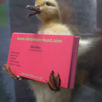 Business Card Holder Taxidermy Duckling by shrunkenheaddotcom