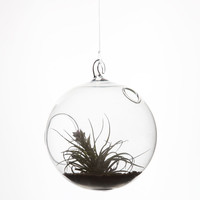 Hanging Bubble Terrarium 246070900 | Room & Dorm