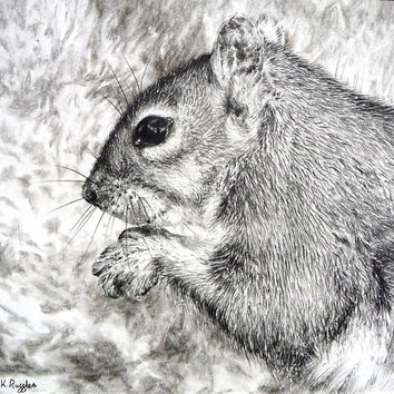 Squirrel original charcoal drawing by ggsarts on Etsy