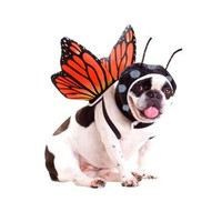 Animal Planet Butterfly Dog Costume-Party City