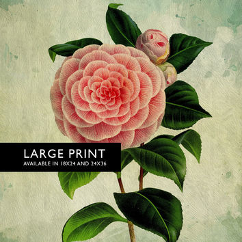 Camellia Print Camellia art Camellia botanical print flower kitchen decor floral print floral wall decor Camellia wall art - Large Giclee