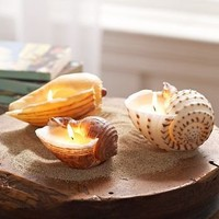 Painted Shell Candles | Pottery Barn