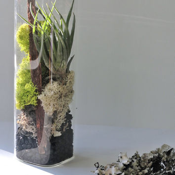 TOP SELLER Air Colors Extra Large Air Cube Terrarium - Air Plant, Tillandsia, Living Home Decor, Gift , Cube, Lichen , Reindeer Moss