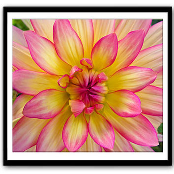 Instant Download Photography, Pink Yellow Dahlia, Nature Photography, Downloadable Image, Downloadable Digital Print, Printable Print,Flower