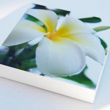 Photo block frangipani print flower wall art
