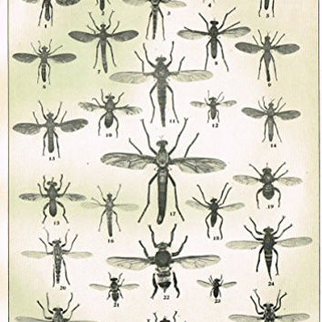Howard's The Insect Book - TRUE FLIES - PLATE XIX - Lithograph - 1902