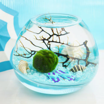 Marimo Moss Ball Aquatic Terrarium ~ Japanese Moss Ball ~ Light Blue Sand ~ Flip Flops ~ Sea Shells ~ Sea Fan ~ Glass Vase Kit ~ Gift Idea