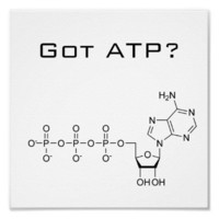 Got ATP? Poster from Zazzle.com