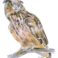 Horned Owl Watercolor Painting - 11 x 14 - Giclee Print