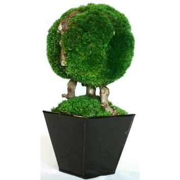 "Forever Green Art 13"" Single Ball Moss Topiary"