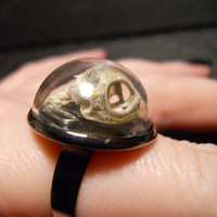Tiny Turtle Skull Glass Dome Ring by TheCuriositeer on Etsy