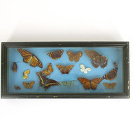 Vintage Mounted Butterfly Collection -- Framed Shadow Box -- Pinned Specimens in Glass Frame -- Butterflies & Moths -- Insect Taxidermy Case