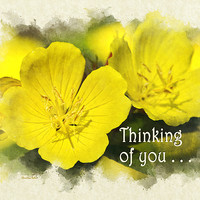 Thinking of You Primrose Flowers Greeting Card Greeting Card