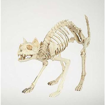 18 in Skeleton Cat - Decorations - Spencer's