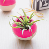 Neon Pink Air Plant Pod