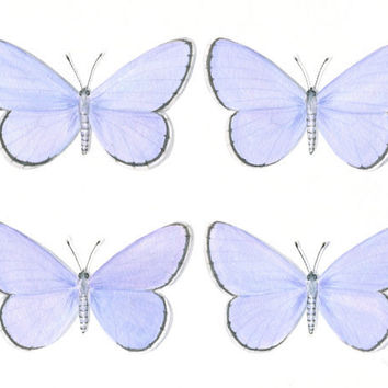 Original Butterfly Painting; Spring Azure Butterfly Quartet by ABFoleyArtworks