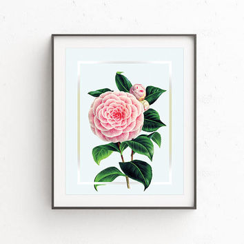 Vintage Camilia Flower Wall art poster, vintage poster, Printable wall art, Digital download, Living Room decor, home decor,