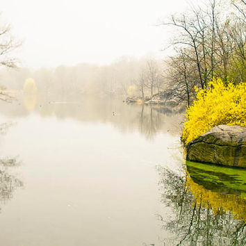Central Park Photography, Spring, New York, Gray, Yellow, White, Minimalist, Nature Photography