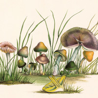 Mushrooms & Toadstools, 1847