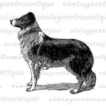 Digital Graphic Collie Dog Image Download Printable Illustration Vintage Clip Art Jpg Png Eps  HQ 300dpi No.4052