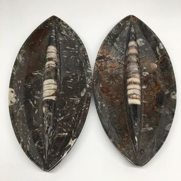 """2pcs,About 12""""x5.3"""" Fossils Orthoceras Ammonite Plates Dishes @Morocco,MF1351"""