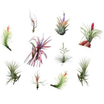 Air Plant Small Grab Bag