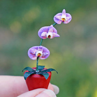 Dollhouse Miniature Flowers Potted Purple Orchid