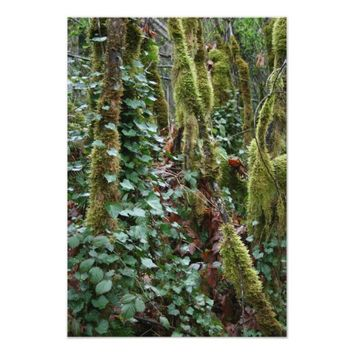 "Moss forest 13"" x 19"" Photo Enlargement"