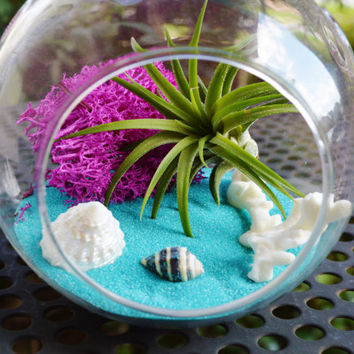 Coral Reef - Glass Globe Hanging Terrarium Kit with Tillandsia  Air Plant and Fushia Reindeer Lichen Moss - Home Decor - Gift Idea - Hanging