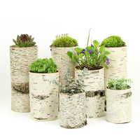 Collection of 7 birch bark vases/candle holders