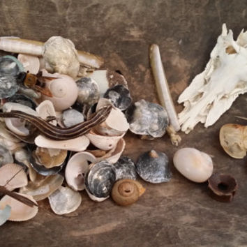 Collection of Nature Items Great for Card Making Scrap Booking Jewelry Making Wedding Boutineers Altered Art Supply