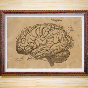 Brain scheme anatomy print Medical poster Vintage decor