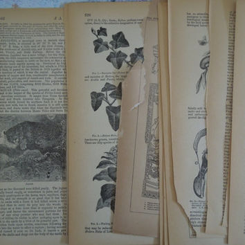 1891 Antique Paper Collage from Encyclopedia Scrapbook Journal Supplies 123 years old
