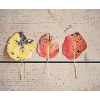 leaf photograph, fall, autumn, fall photograph, nature photography, still life photography, red, yellow, leaf, rustic decor