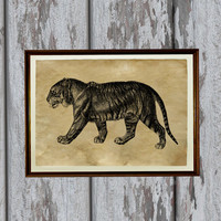 Tiger poster African animal print Safari style Natural history illustration 8.3 x 11.7 inches