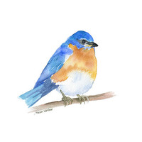 Eastern Bluebird Watercolor Painting - 11 x 14 - Giclee Print
