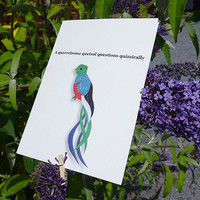 Bird greeting card, colourful hand-illustrated quetzel card with witty tongue-twisting phrase, ideal for the animal lover in your life