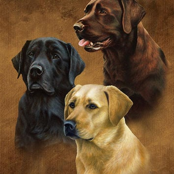 Labradors  JQ Signature Queen Blanket - Free Shipping in the Continental US!