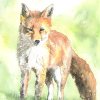 Red Fox Watercolor Painting Fine Art Print 8 x 10