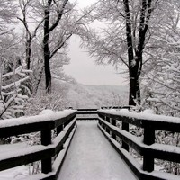 Landscape Photography Snowfall Symmetry 16x20 Fine Art Photo