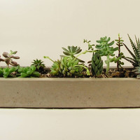 Long Concrete Planter