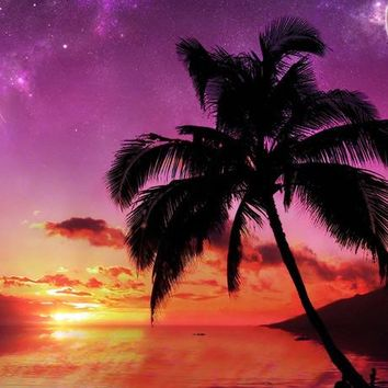 Palm Tree Sunset I Photography Background / 2815