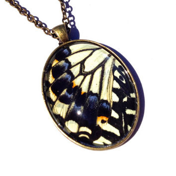 Real Butterfly Wing Necklace, Asian Insect Statement Necklace, Chinese Swallowtail, Japanese Pendant