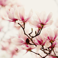 Japanese Magnolia I Art Print by Erin Johnson
